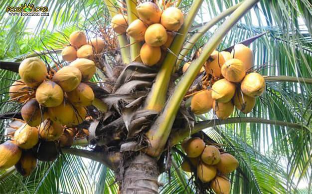 foodslord.com---King-Coconut tree