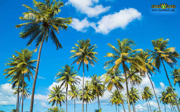 foodslord.com---Tall-Varieties-coconut