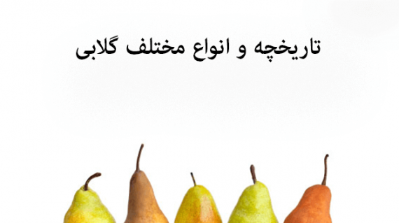 foodslord.com---تاریخچه-و-انواع-مختلف-گلابی