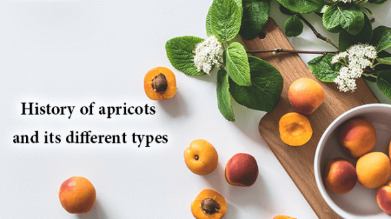 foodslord.com---History-of-apricots-and-its-different-types