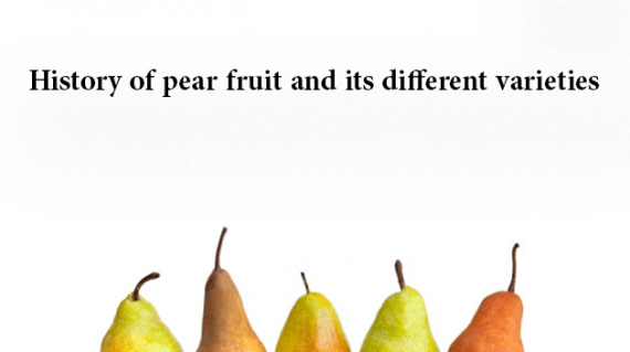 foodslord.com---History-of-pear-fruit-and-its-different-varieties