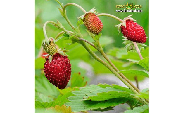 foodslord.com---Alpine-strawberry---types