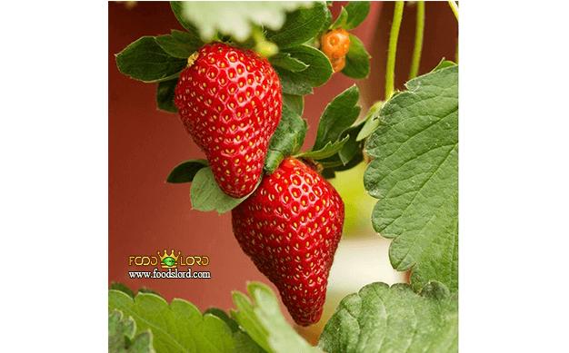 foodslord.com---Everbearing-strawberry