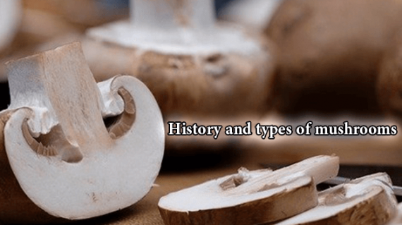 foodslord.com---History-and-types-of-mushrooms