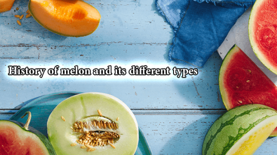foodslord.com---History-of-melon-and-its-different-types
