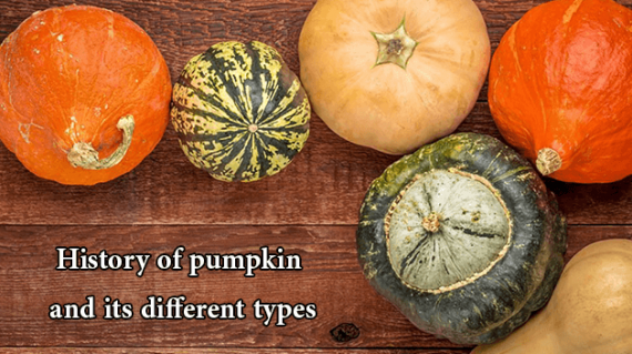 foodslord.com---History-of-pumpkin-and-its-different-types