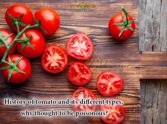 foodslord.com---History-of-tomato-and-its-different-types