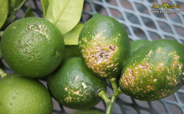 foodslord.com---تعیین آسیب دیدگی برای کیفیت میوه خشک شده
