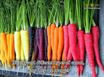 foodslord.com---History-and-different-types-of-carrot-why-they-are-orange