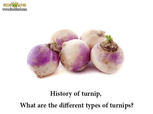foodslord.com---history-of-turnip,-What-are-the-different-types-of-turnips